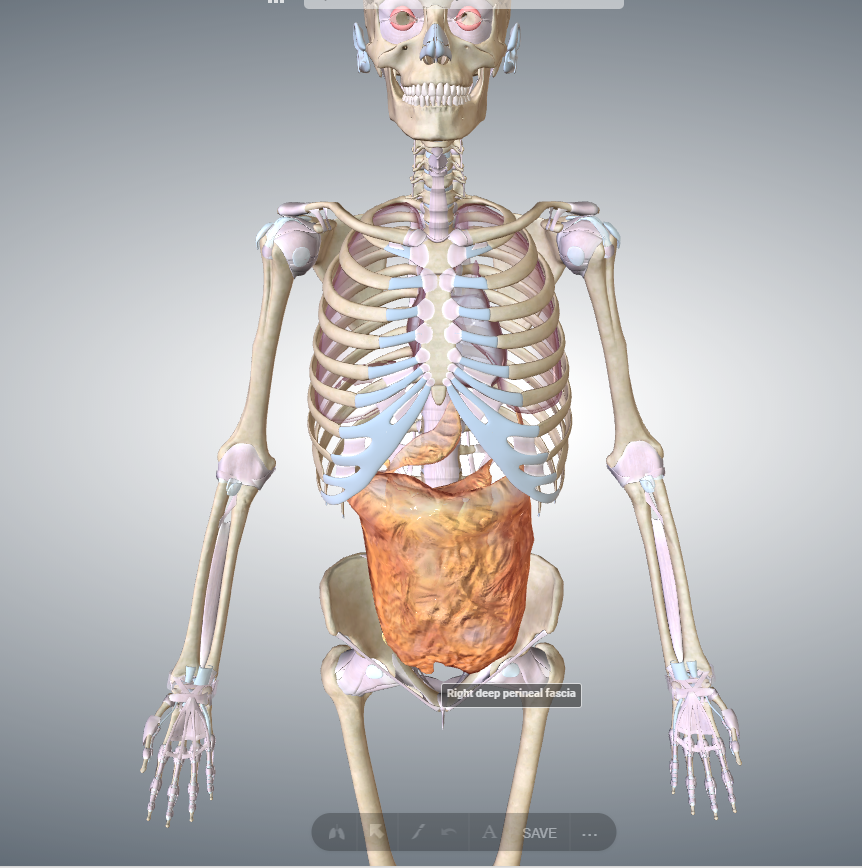 整体における胸骨の扱い