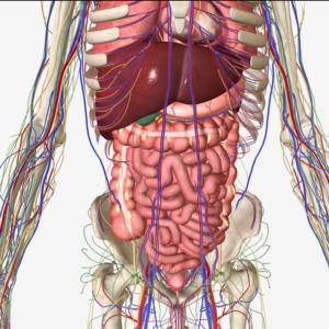 腰痛と内臓